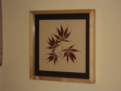Japanese Maple Botanical Print | Botanical Prints