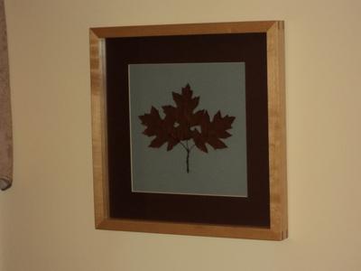 Northern Pin Oak Botanical Print | Botanical Prints