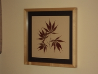 Image Japanese Maple Botanical Print