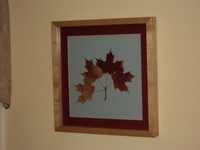 Image Sugar Maple Botanical Print